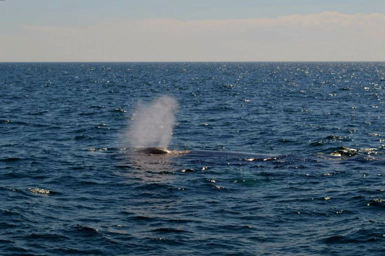 whaleblow