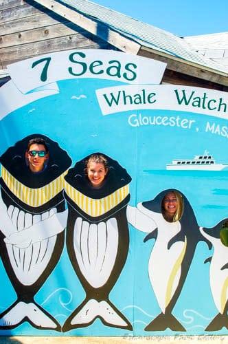 whalefaces