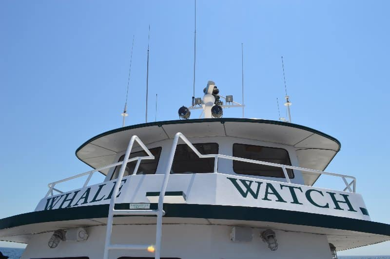 whalewatchboat
